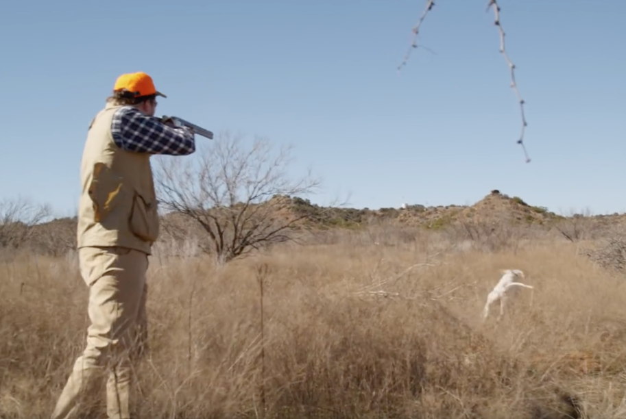 Texas Hill Country Quail - Dove Hunt at the 4r ranch